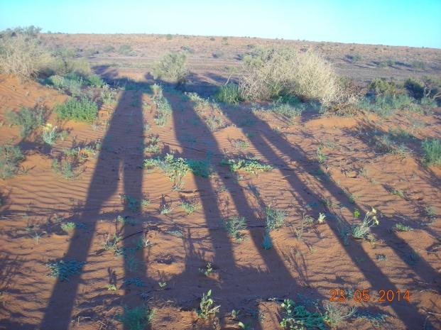 Legs in the desert