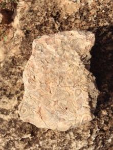 Fossilised designs
