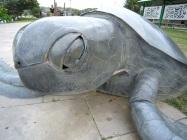 Thursday Island Turtle, Torres Strait