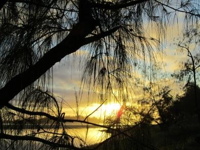 Sunset Pennefather casuarinas