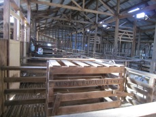 Woolshed