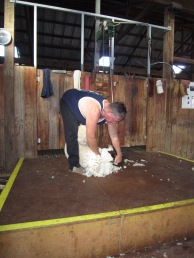 Billy the shearer