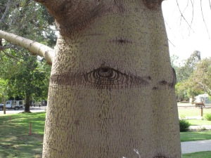 Eye in tree