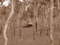 Truck graveyard 1