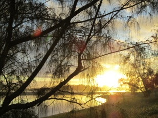 Sunset through the she oaks at Pennefather